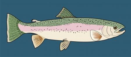 trucha: Ilustración detallada de una trucha arco iris en un azul Backgorund