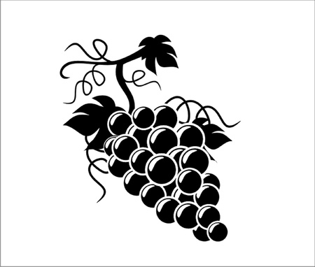 Silhouette Grapes illustration with white background Vector