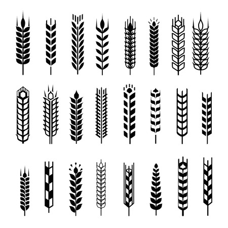 bran: Wheat ear icon set, leaves icons, graphic design elements, black isolated on white background, vector illustration. Illustration