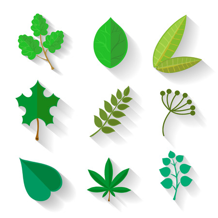 Set of leaves of various trees. Isolated green leaves on a white background. Spring, summer. Sketch, design elements in flat style. Vector illustration. Vector