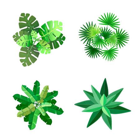 palmier: Arbres vue de dessus pour le paysage illustration sur fond blanc Illustration