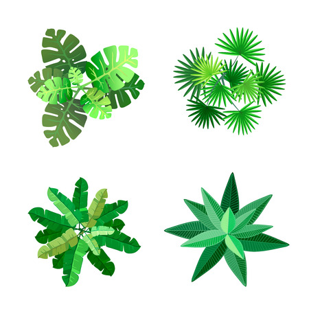 palm leaf: Trees top view for landscape vector illustration on white background