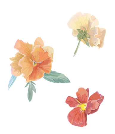 viola: Set of flowers viola. Watercolor vector illustration. Isolated design elements. Floral set. Gardening. For invitations, typography, web