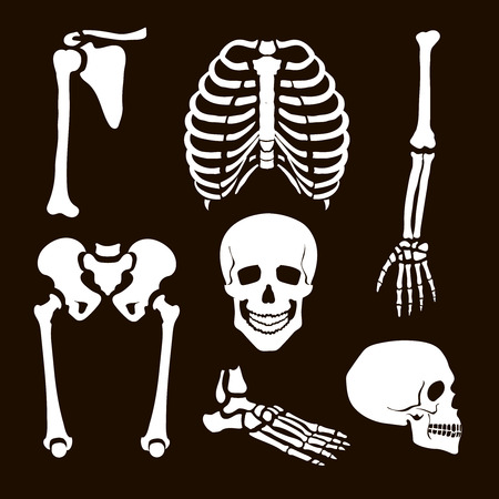 calavera caricatura: Ilustraci�n Colecci�n Esqueleto humano conjunto blanco