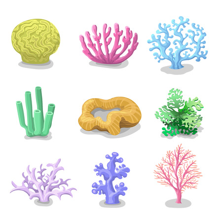 flora fauna: Colorful corals and Reef Set of isolated. Nature marine on a white background. Vector underwater flora, fauna. Illustration