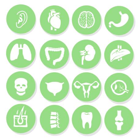 medical heart: human organs icons set Anatomy simbols