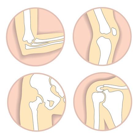 talus: Set of human bodys parts Illustration