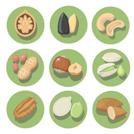 pumpkin seeds: Nuts icon set. peanut, cashew, pistachio and hazelnut illustration Stock Photo