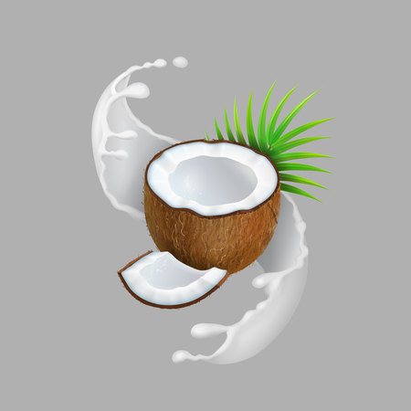 Coconut and milk splash. Natural fruit Realistic vector illustration.