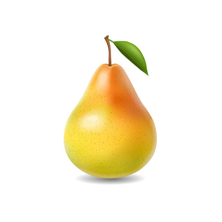 Pear realistic isolated illustration.