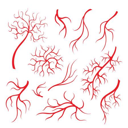 capillaries: Human eye veins or vessel, red capillaries, blood arteries isolated set