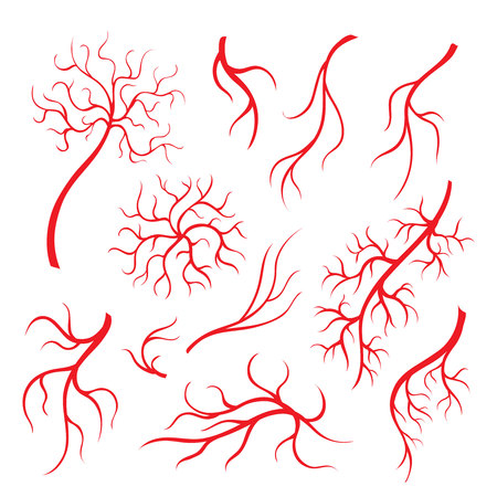 Human eye veins or vessel, red capillaries, blood arteries isolated set