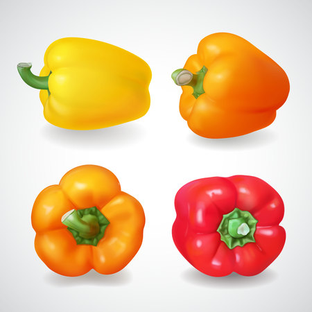 Pepper bell vegetable. Realistic vector icon set