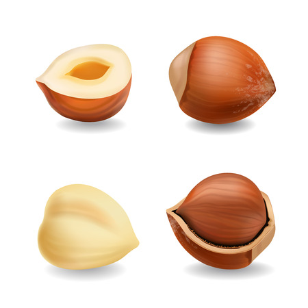 Hazelnuts set realistic vector on a plain background.