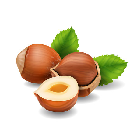 nutshells: Hazelnuts with leaves realistic Illustration