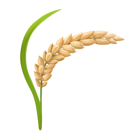 Rice icon on white background, vector illustration.