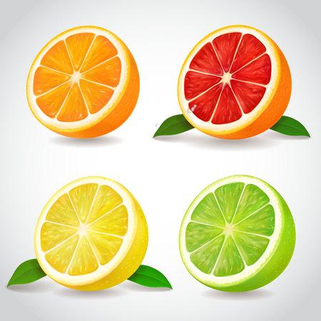 Fresh citrus fruit halves. Orange grapefruit lemon lime isolated vector realistic icons Illustration