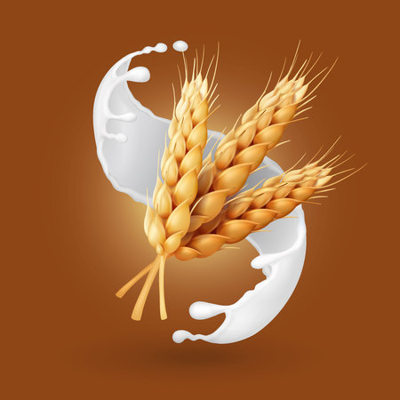 Wheat and milk splash. Barley cereals in yogurt illustration. Realistic vector Illustration