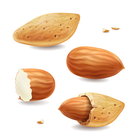 Almond nuts with shell isolated on white background Realistic vector