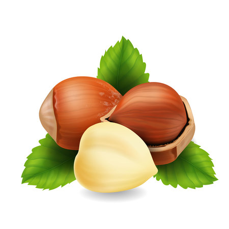 Hazelnuts with leaves in realistic design vector illustration