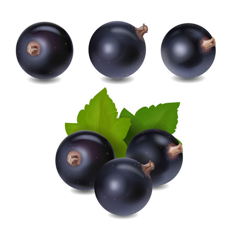 Blackcurrant berry realistic icon 3d vector illustration.