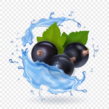 Beeren der schwarzen Johannisbeere mit grünen Blättern in Wasser spritzen realistisch