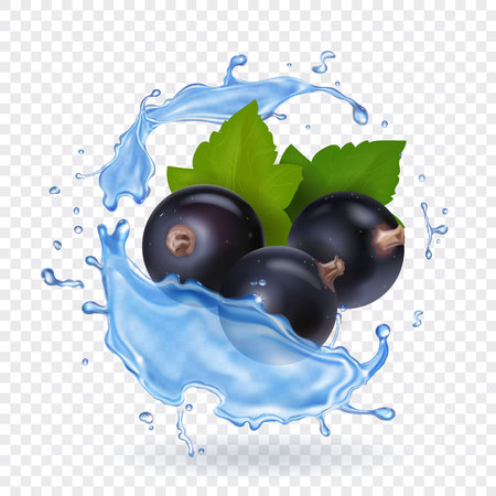 Berries of black currant with green leaves in water splash realistic