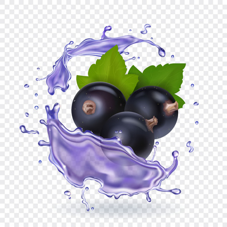 Blackcurrant juice splash. Forest berries smoothie. Vector realistic illustration.