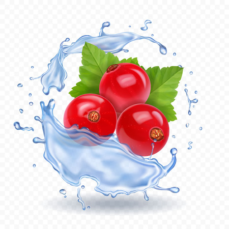 Red currant isolated in water splash realistic berry icon