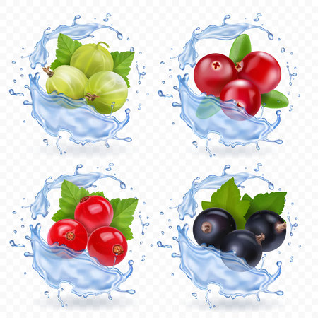 Berries set with cranberry, red currants, gooseberry and black currant in water splash