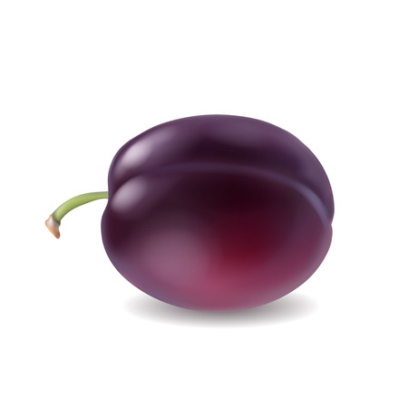 Ripe plum isolated realistic 3d illustration