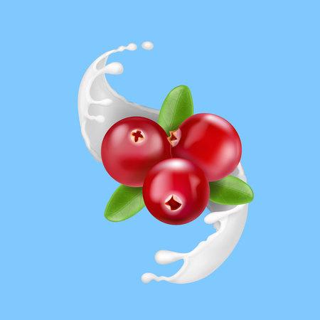 Red cranberry in milk splash. Yogurt splash with berries isolated Vector illustration.
