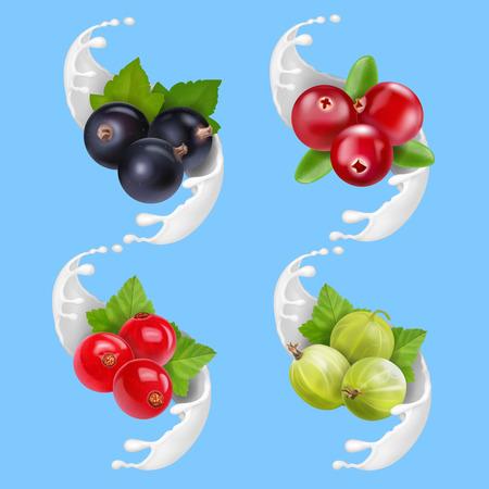 Fruit berries and milk or yogurt splash. Realistic illustration.