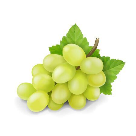 Gelbe oder grüne Trauben verzweigen sich mit isolierten Blättern. Traubensymbol. Realistischer Vektor Vektorgrafik