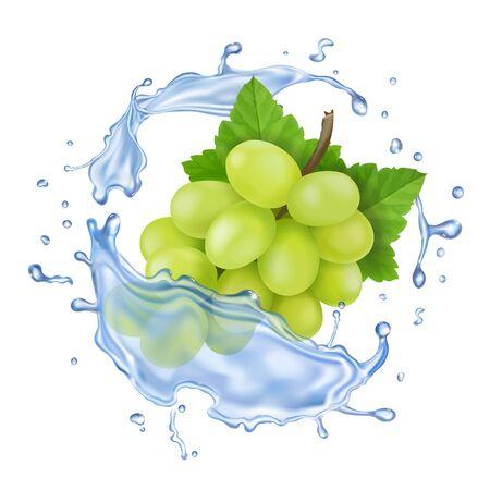 Raisin blanc dans les éclaboussures d'eau. Icône de vecteur de branche de raisin réaliste Vecteurs