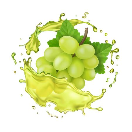White grapes branch and juice splash. Realistic vector icon Illustration