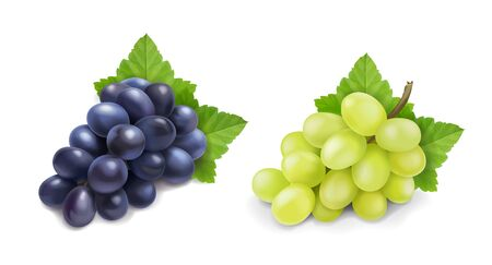 Red and white table grapes. Wine grapes bunch