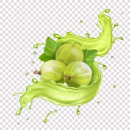Gooseberry in reaalistic juice splash. Sweet berry vector