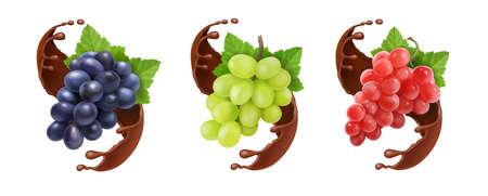 Red black and white table grapes, wine grapes in chocolate. Dessert fruits vector icon set.