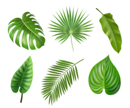 Tropical palm leaves set isolated on white background. Monstera philodendron and banana jungle leaf, Exotic foliage collection vector