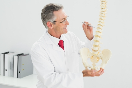 Smiling male doctor holding skeleton model in his office photo