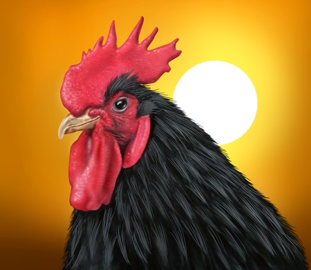 early morning: Sunrise with a rooster representing early morning and breakfast time showing the concept of an early start to the day featuring a black feathered male chicken and a golden sky with a bright sun.                      Stock Photo