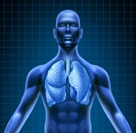 bronchi: Sistema repiratory humano representado por una figura humana azul con pulmones mostrando la atenci�n m�dica de salud necesaria para los pacientes de pulm�n de c�ncer y otras enfermedades.