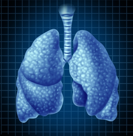 bronchioles: Human lungs organ as a medical health symbol representing the respiratory tract and breathing system showing the anatomy of the healthy respiration concept on a blue grid background. Stock Photo