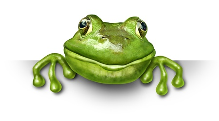 spokesperson: Frog holding a blank sign front view represented by a green happy smiling amphibian holding a white background card for an advertising promotion presenting an important announcement. Stock Photo