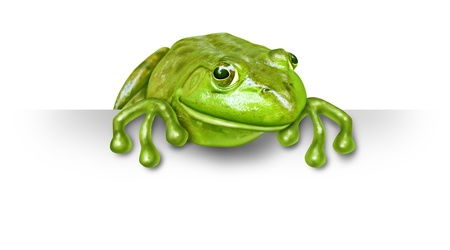 spokesperson: Green frog with a blank sign sitting on the top of a white card background representing an advertisement presented by a green happy amphibian was a promoter and presenter spokesperson character.