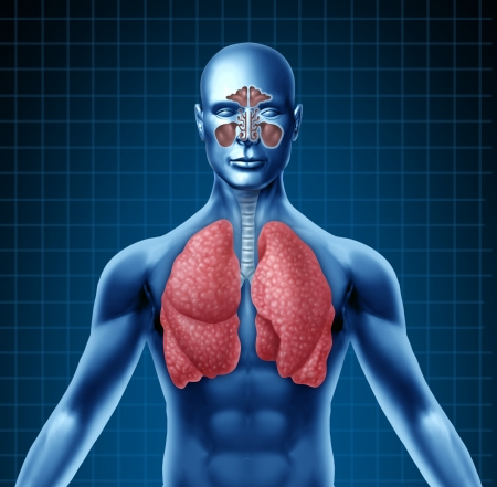 bronchioles: Human sinus with nasal cavity and respiratory system represented by a blue human figure with lungs showing the medical health care symbol for breathing and inhaling after a cold and flu viral attack.