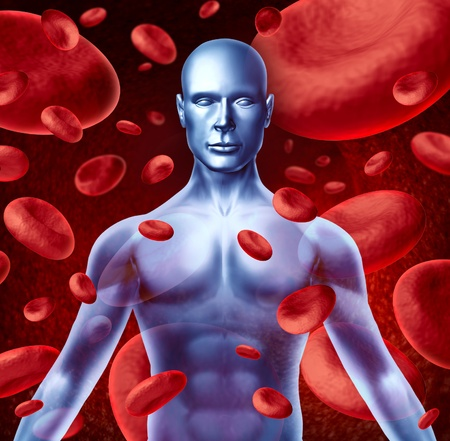 body blood: Human blood circulation symbol with red blood cells flowing through veins pumped by the heart muscles and patient circulatory system representing a medical health care symbol. Stock Photo