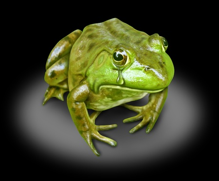 polluted environment green frog crying on black Stock Photo - 10976378