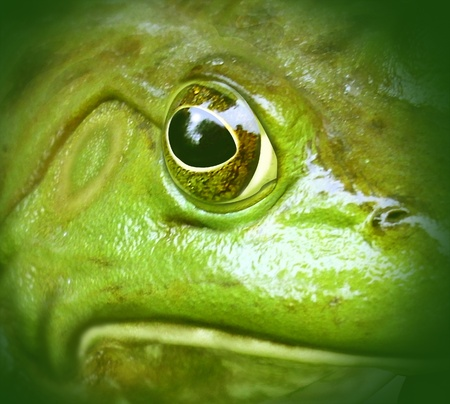 catastrophic: polluted environment green frog conservation symbol